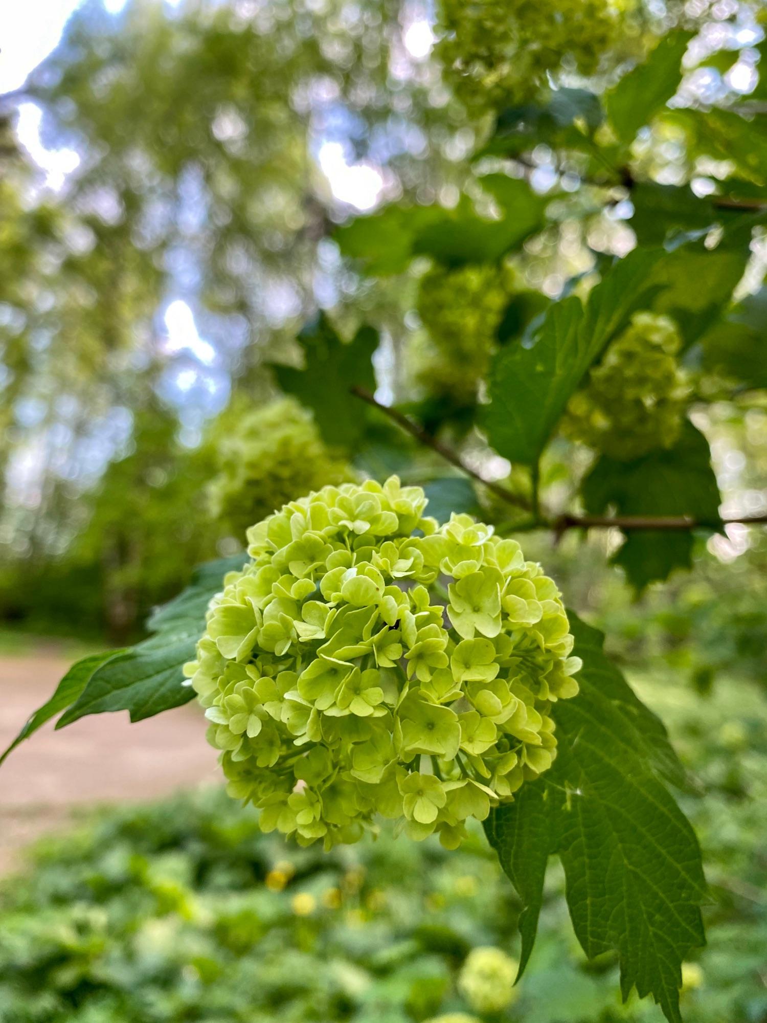 В начале цветения#сновавесна