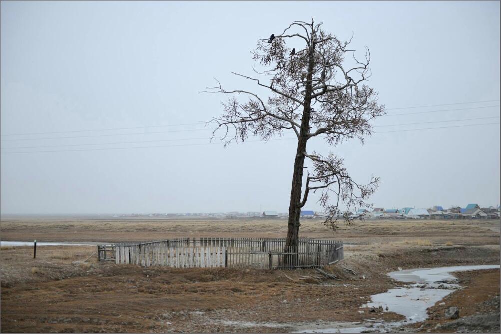 Последнее дерево_Тарышкин_Александр