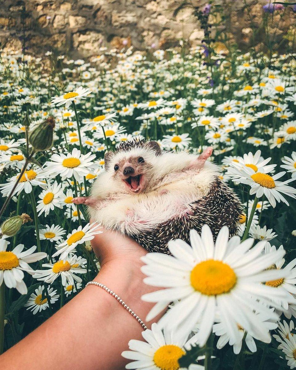 Позитивные картинки с животными доброе утро, дружба анимация распечатать