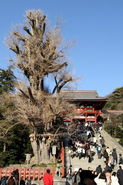 Main Temple and tree