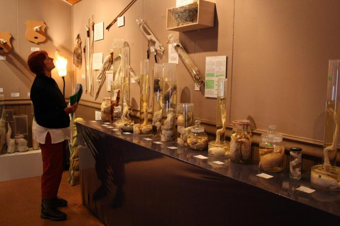 необычные музеи4