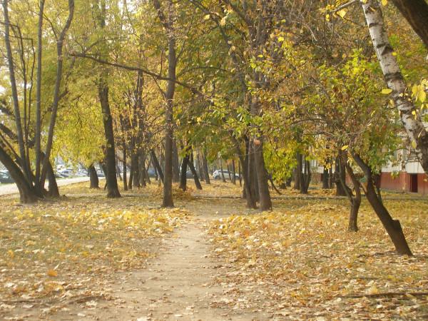 В местном парке