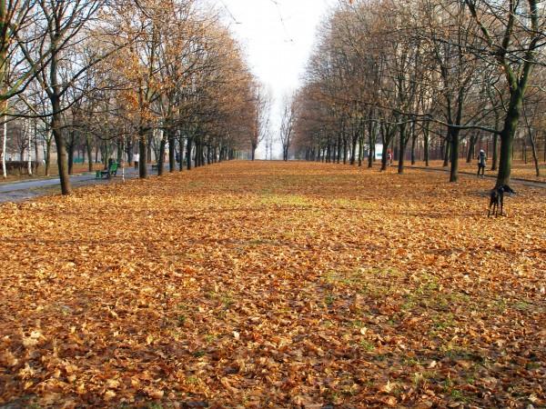 Поздяя осень