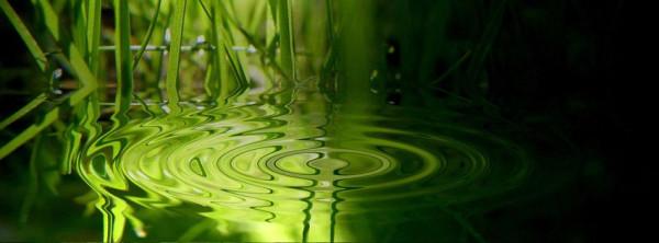 grass_water_drop-851x315
