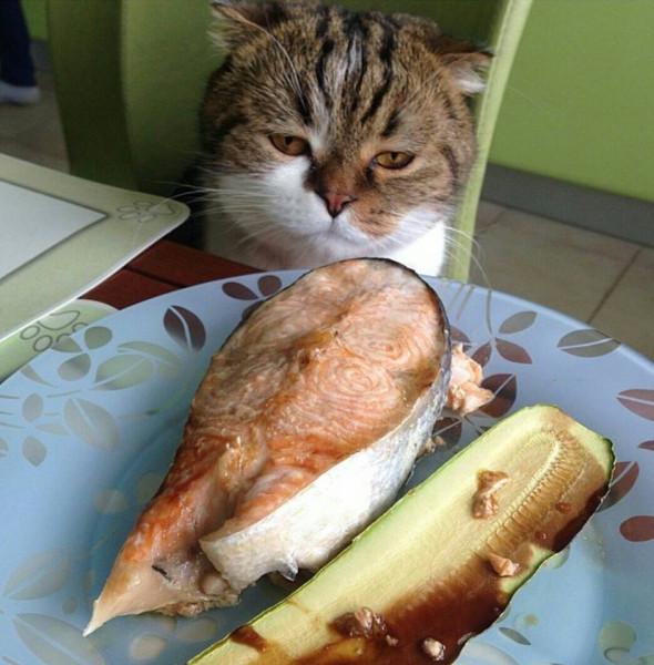 котик смотрит