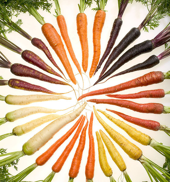 559px-Carrots_of_many_colors_cutout