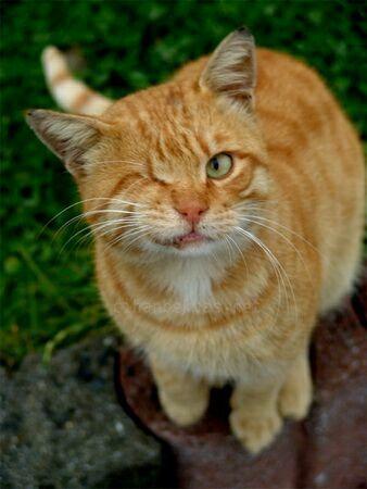 cats00906.jpg