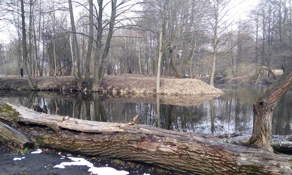 Река разветвилась, огибая островок.