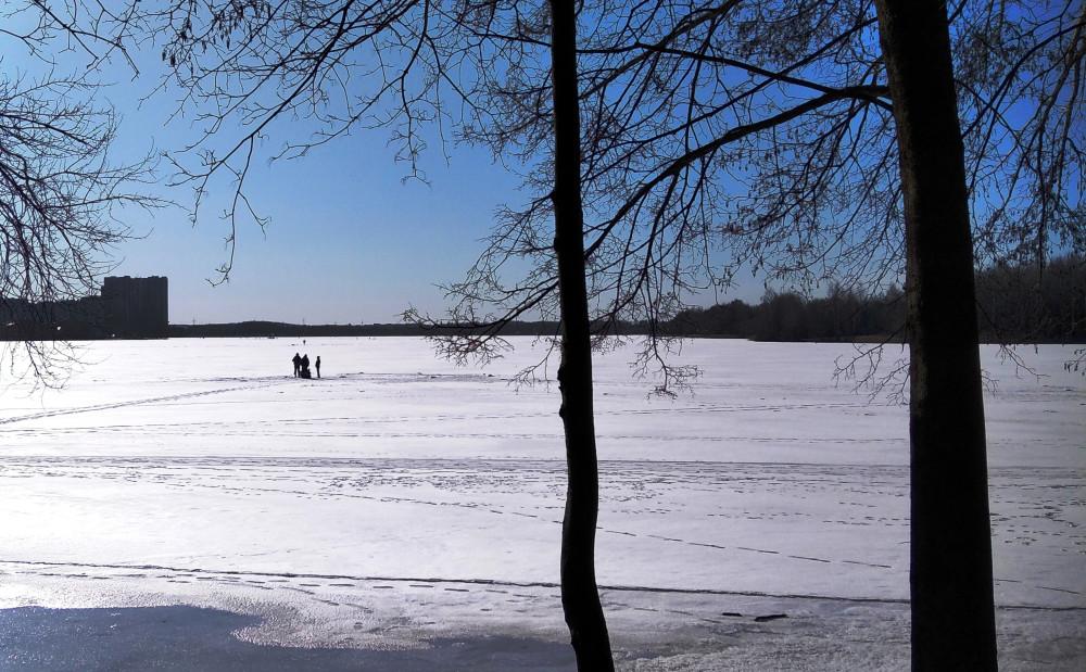 По берегу водохранилища Дрозды