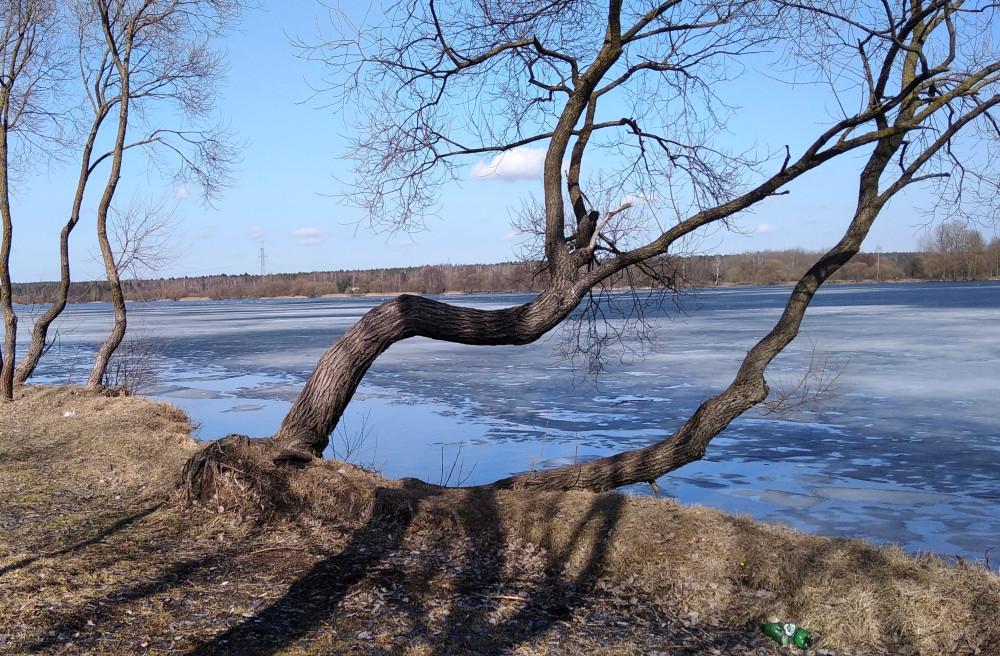 По берегу водохранилища Дрозды.