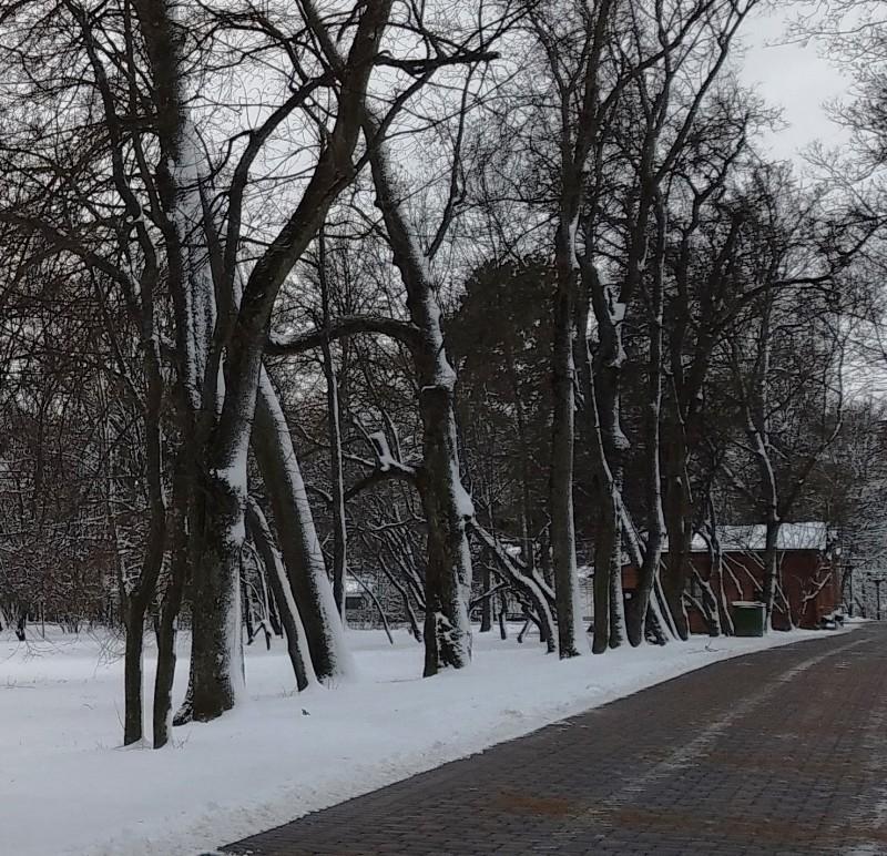 За этим невзрачным домиком сторожа начинается по-настоящему древний парк. Кстати, в этом домике небольшое уютное кафе.