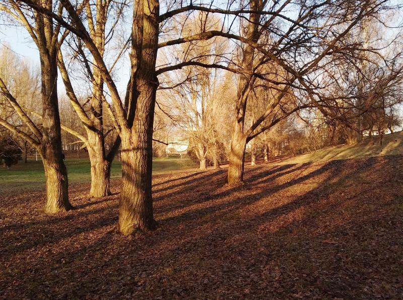 На склонах к тальвегу сохранились старые деревья.