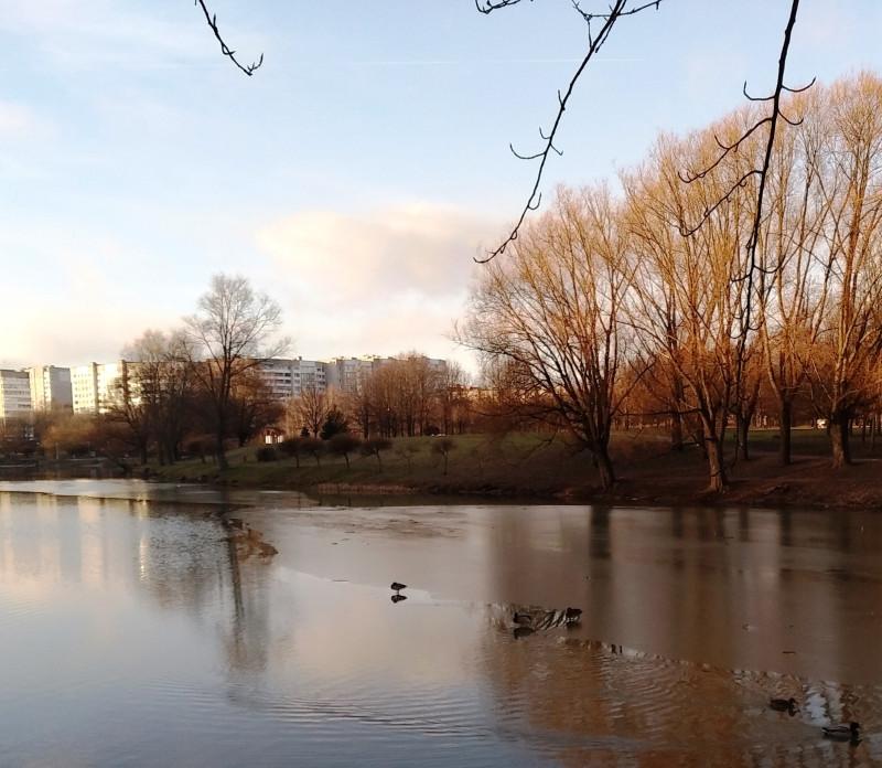 Несмотря на тёплую погоду на озерце ещё сохранился тонкий лёд.