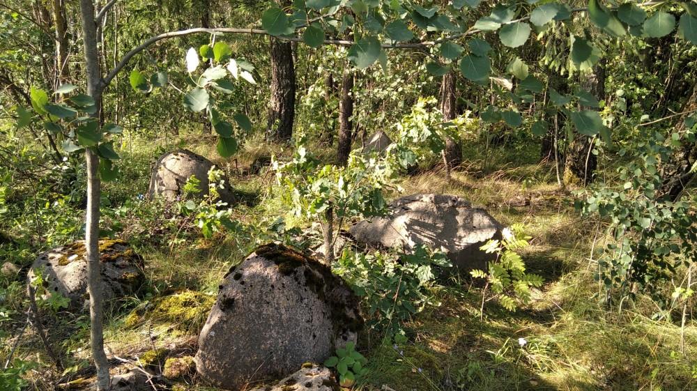 В зарослях очень часто встречаются огромные камни