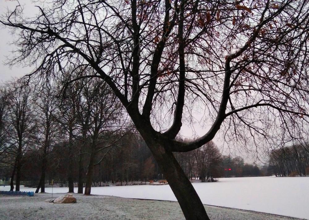 Озеро покрылось тонким льдом