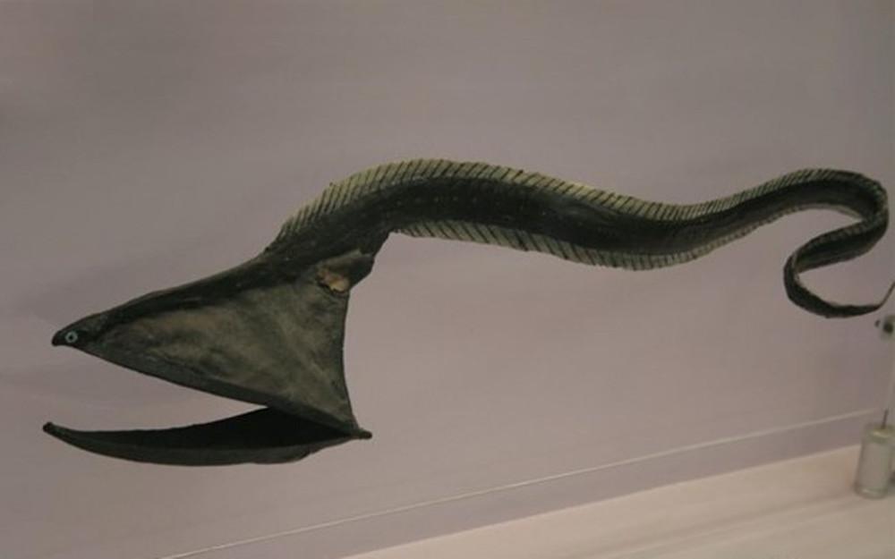 Большерот или рыба-пеликан