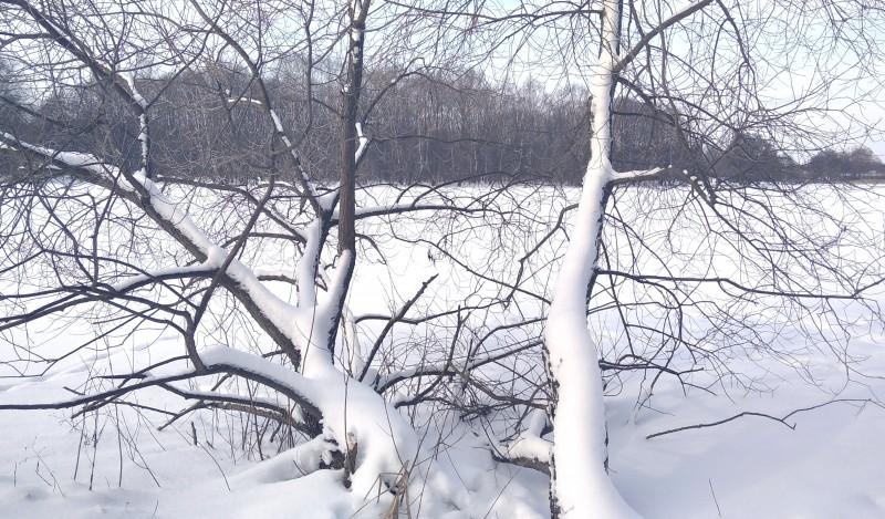 Деревья легли под тяжестью снега ))