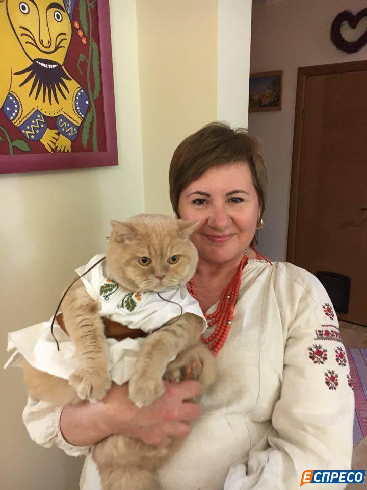 кот в вышиванке