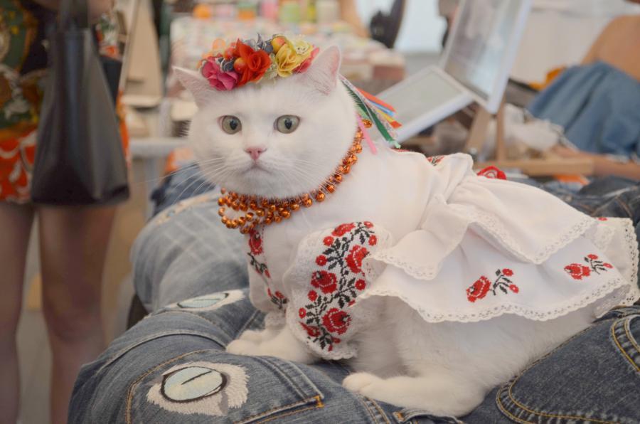кішка в вишиванці