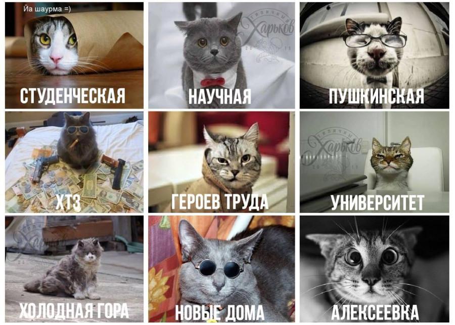 citycats