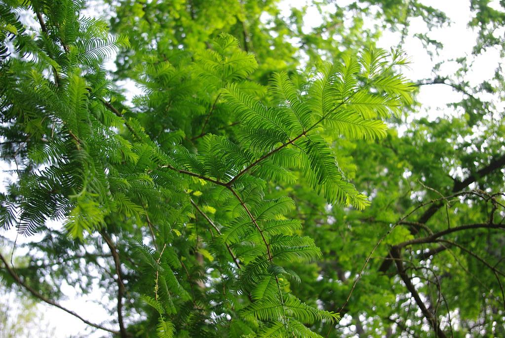 листья, дендропарк
