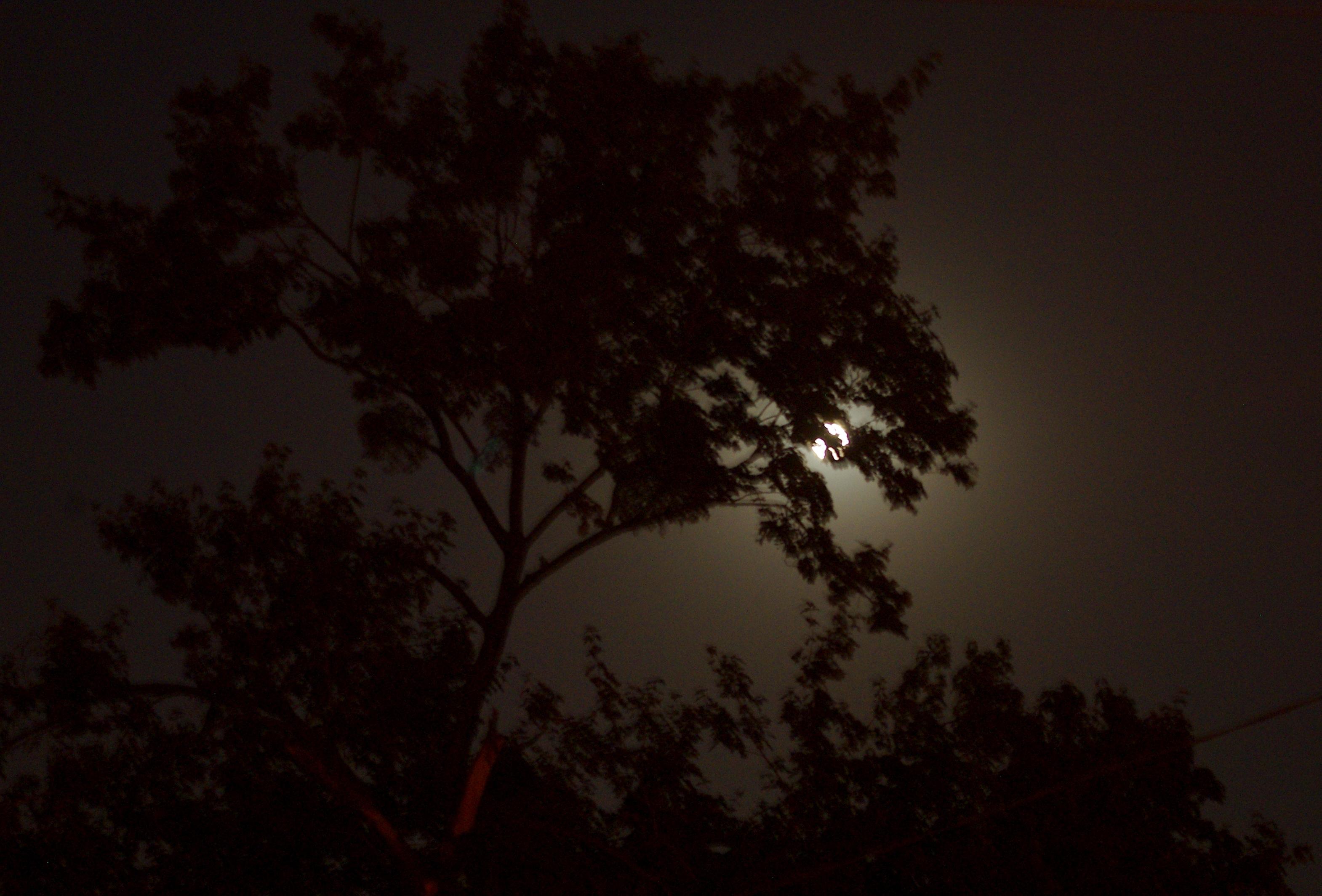 затмение луны в Харькове
