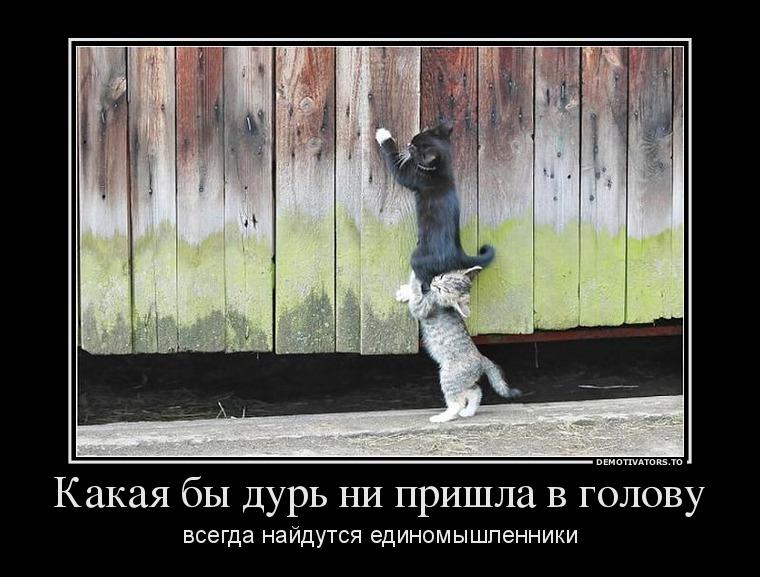 84894450_kakaya-byi-dur-ni-prishla-v-golovu