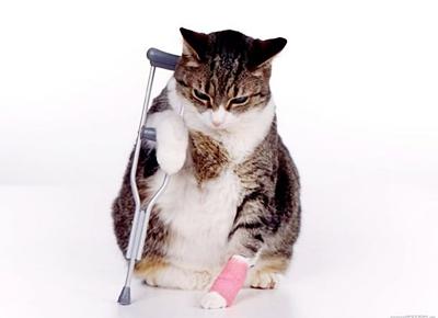 кот заболел