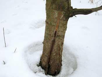 Нагрев ствола зимой