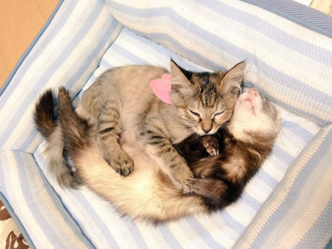 Котик-хорьки 1