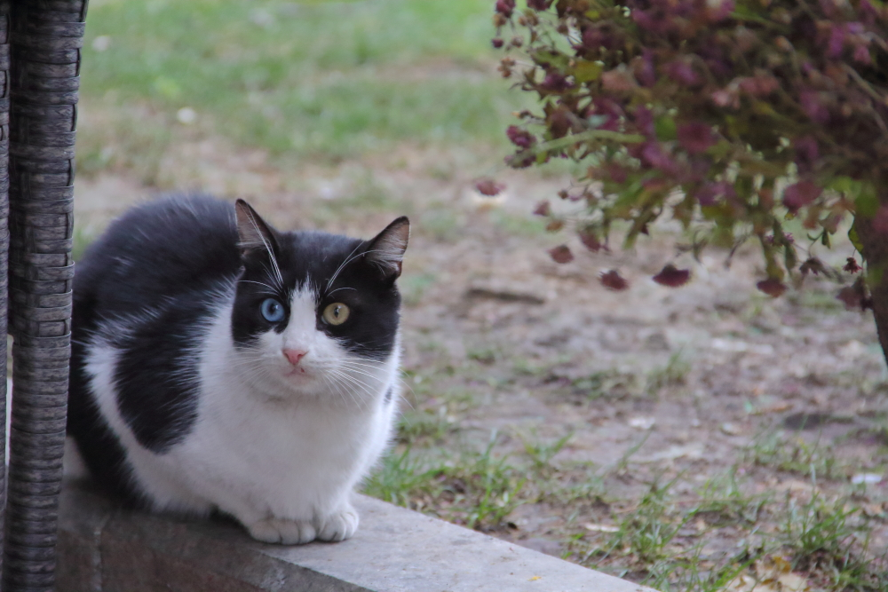 Кошка 2