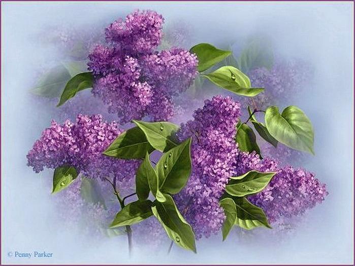Сирень цветёт открытки