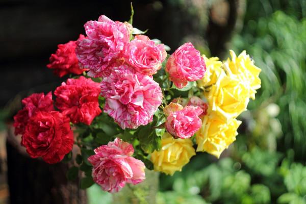 birthday_roses2