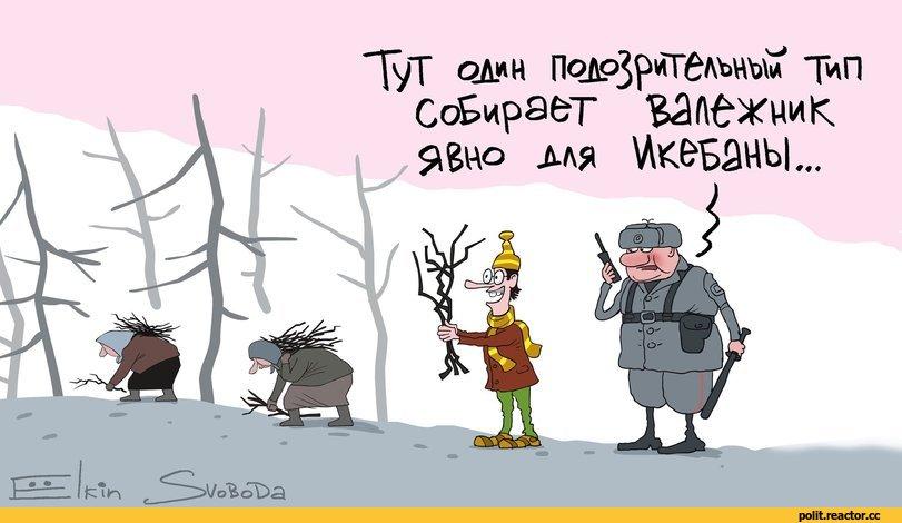 Путин в первый раз в истории России разрешил собирать валежник.