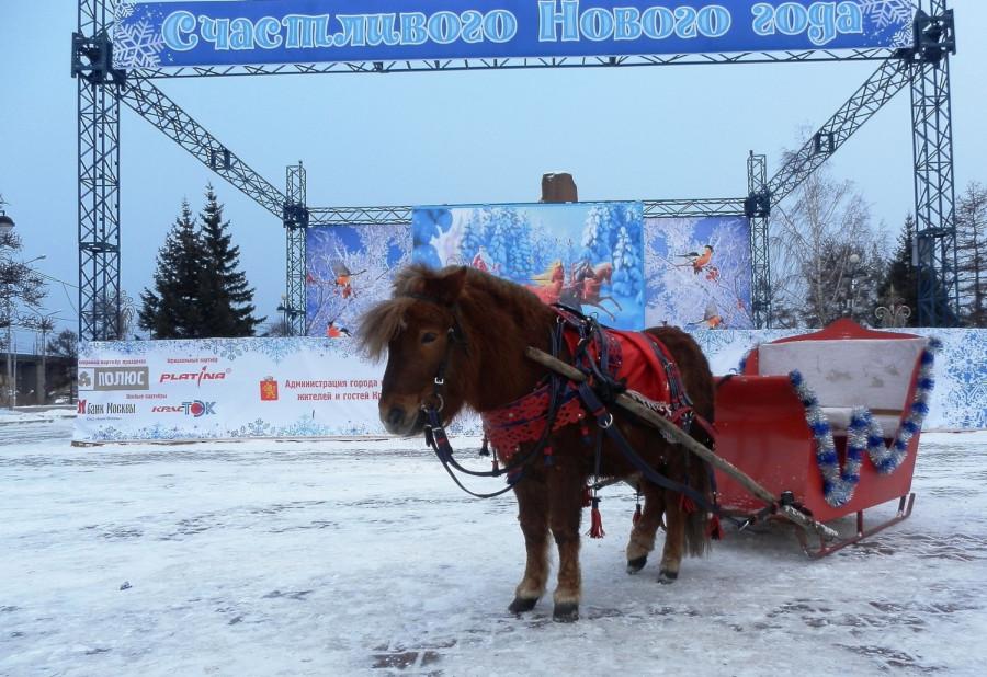 Фото Николай Юрлов Год Лошади