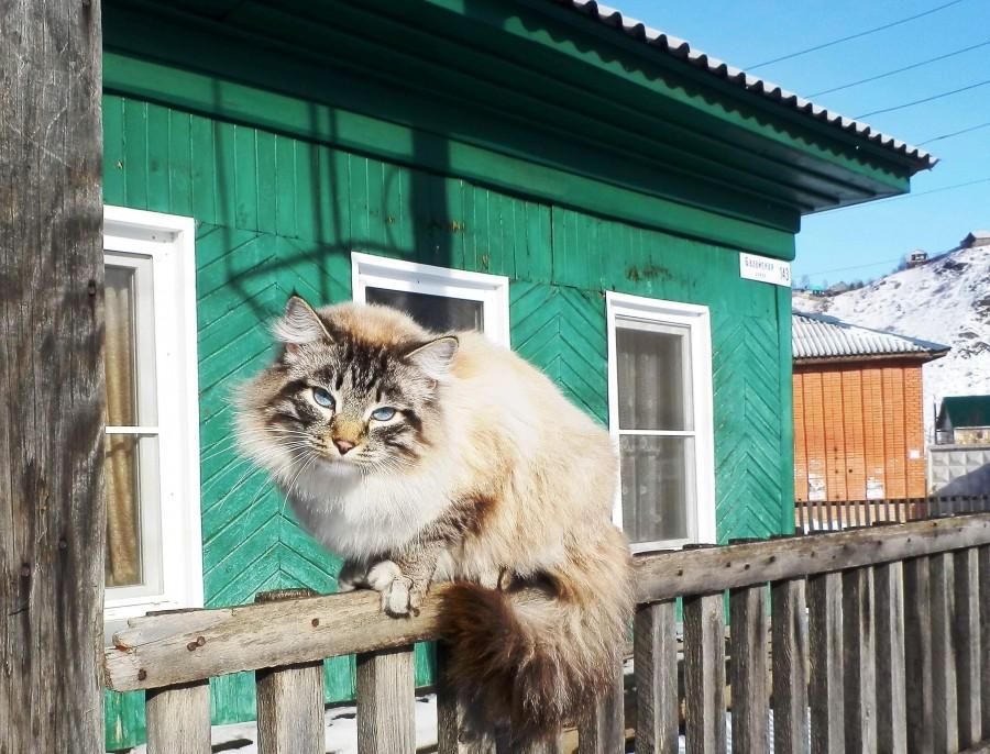 Фото Николай Юрлов Сибиряк