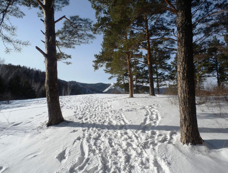 Фото Николай Юрлов На солнечной поляночке