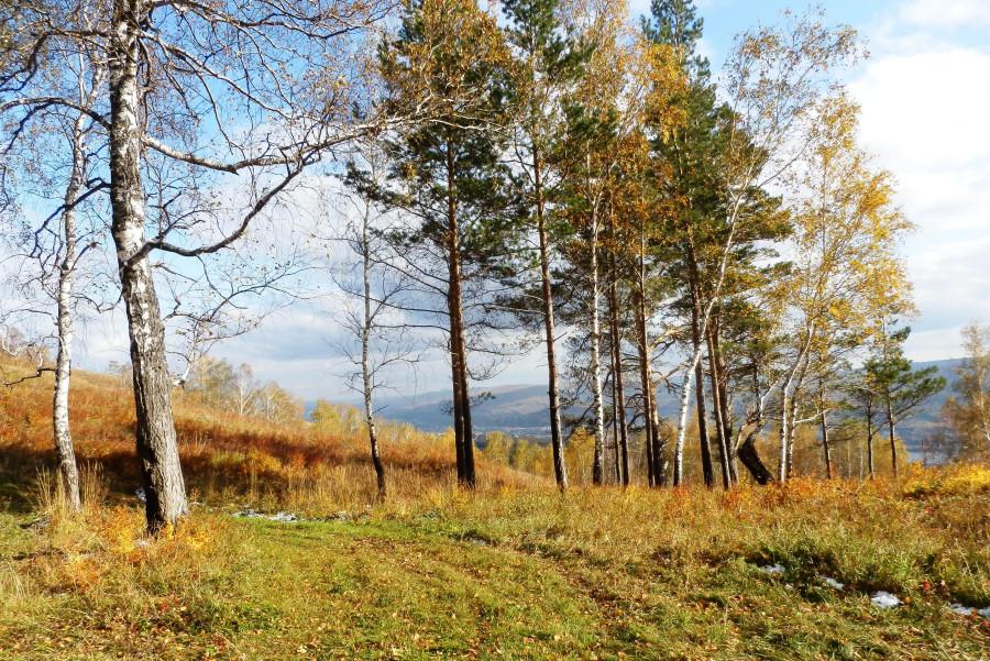 Фото Николай Юрлов Первый снег золотой осени