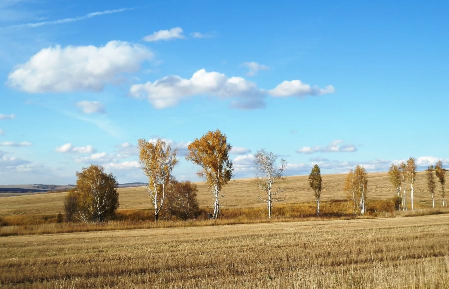 Фото Николай Юрлов Русское поле