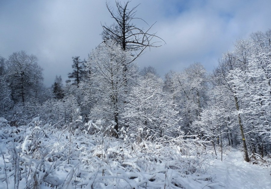 Фото Николай Юрлов Зимняя сказка