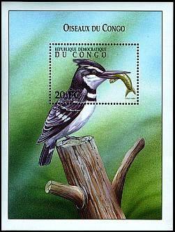 73.F_Common Kingfisher_87.jpg