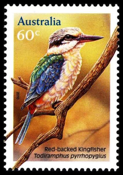 84.F_Common Kingfisher_14.jpg