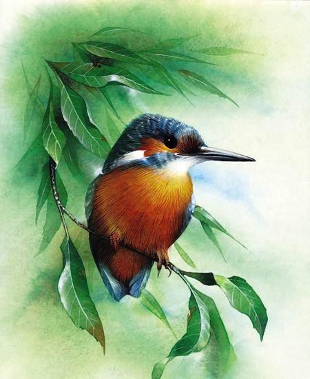 85.David A Finney (b.1961) — Kingfisher (450x500).jpg