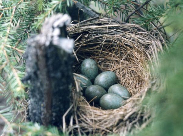 гнездо 1