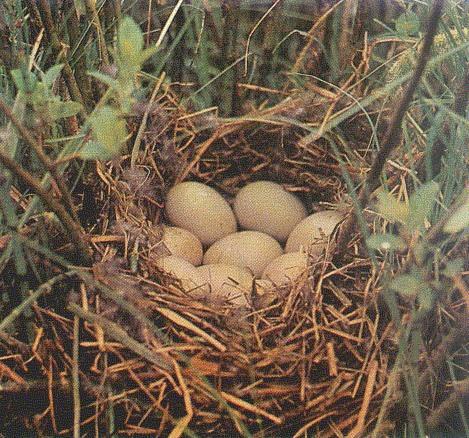 гнездо 3