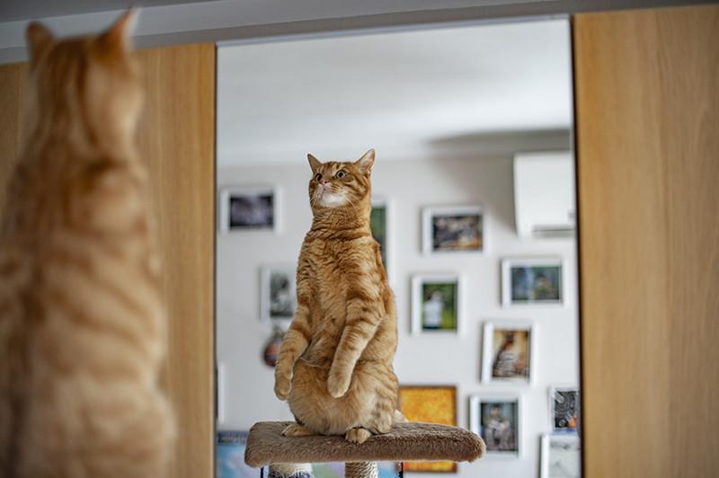 Утренний моцион перед зеркалом :)