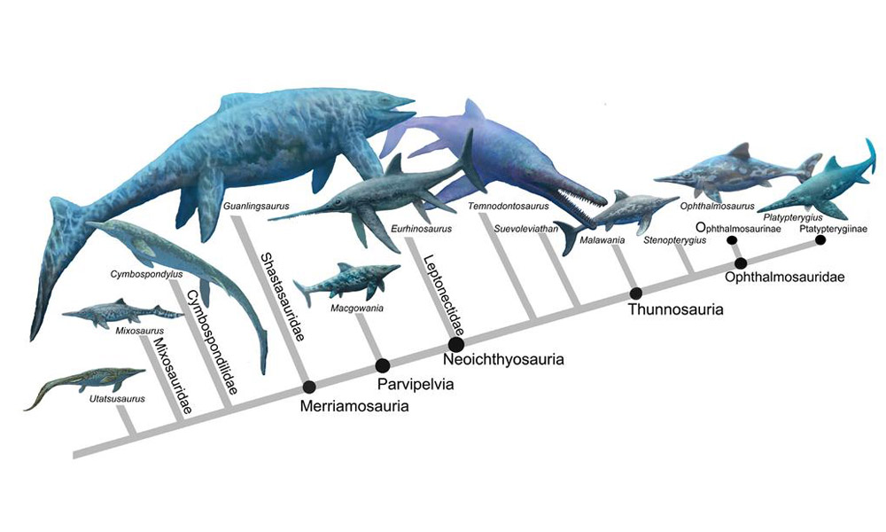 Родословие и разнообразие ихтиозавров