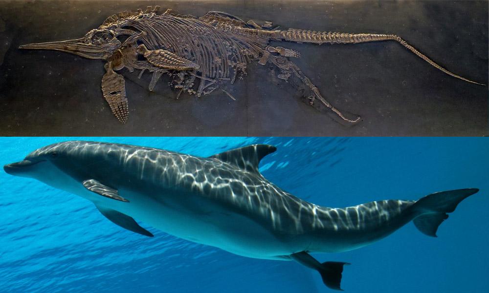 Окаменелый скелет самочки ихтиозавра