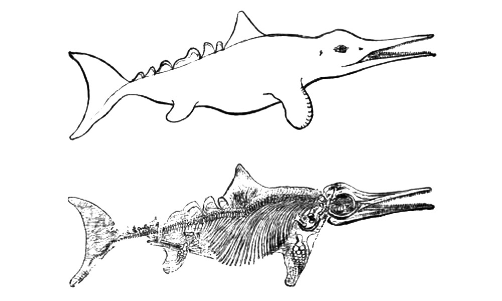 Скелет и реконструкция облика рыбоящера