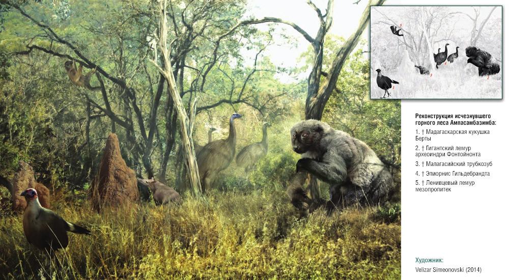 Реконструкция исчезнувшего горного леса Ампасамбазимба